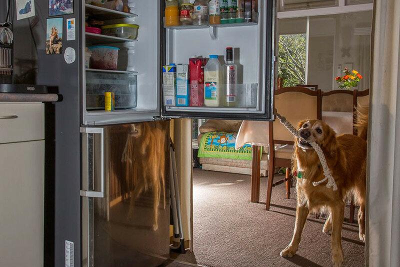 собаки на работе