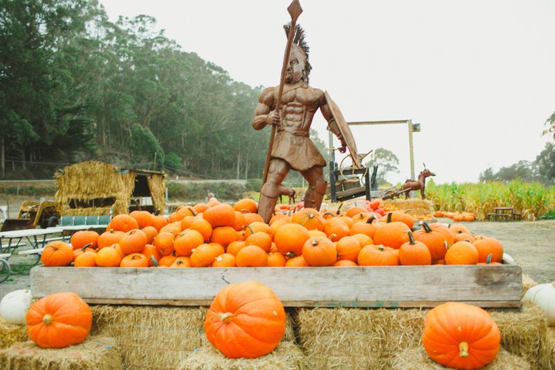 aratafarm pumpkin