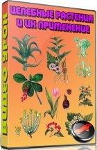Книга Целебные растения и их применение