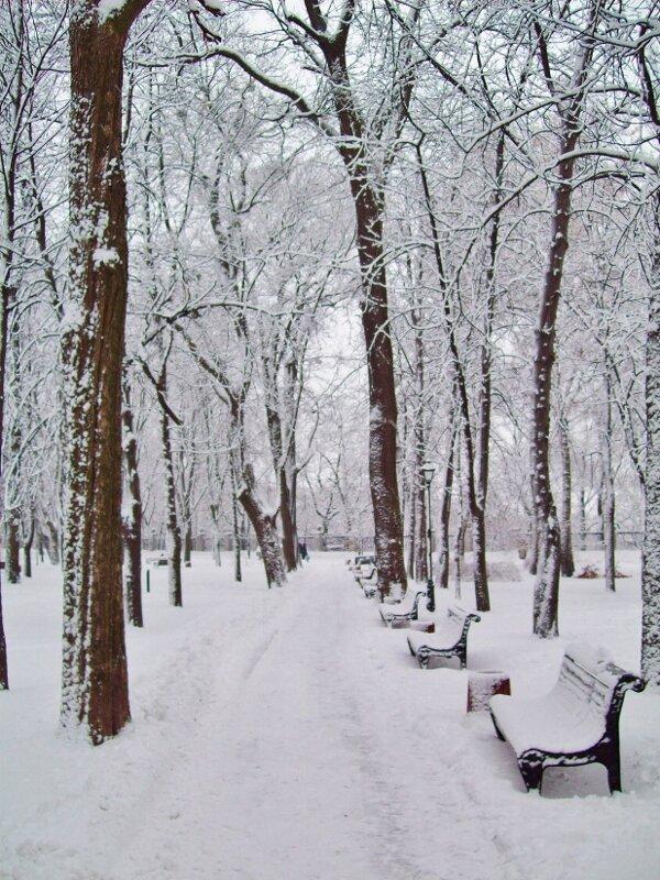 Парковая дорожка зимой