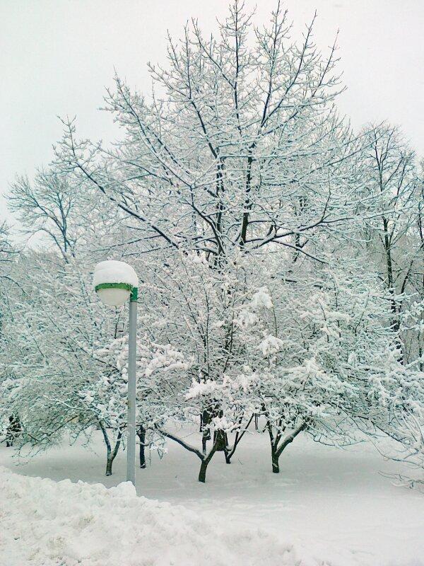 Снежная зима 2012
