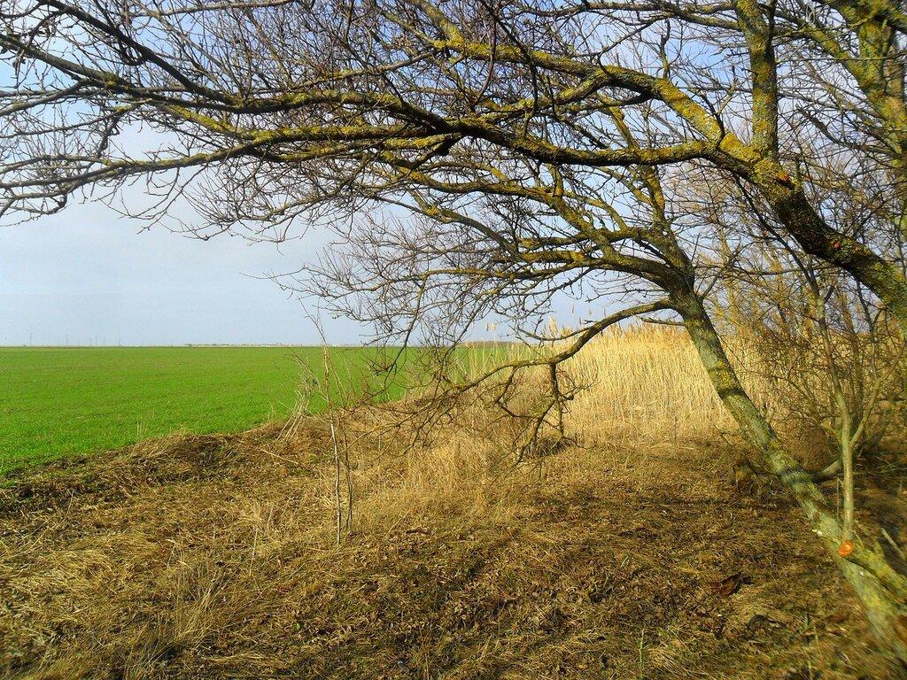 Поле зелёное, ветви голые ... SAM_5494.JPG