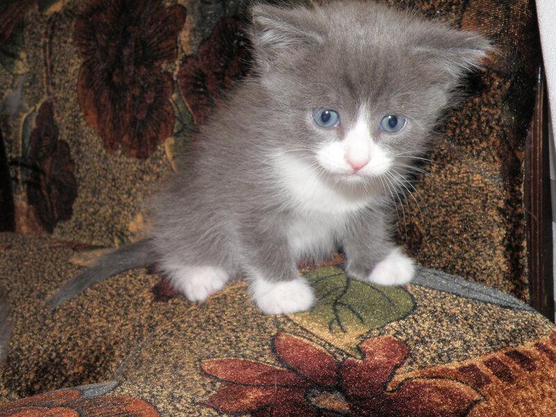 Кошка осчастливила!!! 0_7ad61_aedfe257_XL