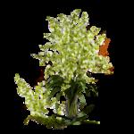 DBK PLANTS 055.png