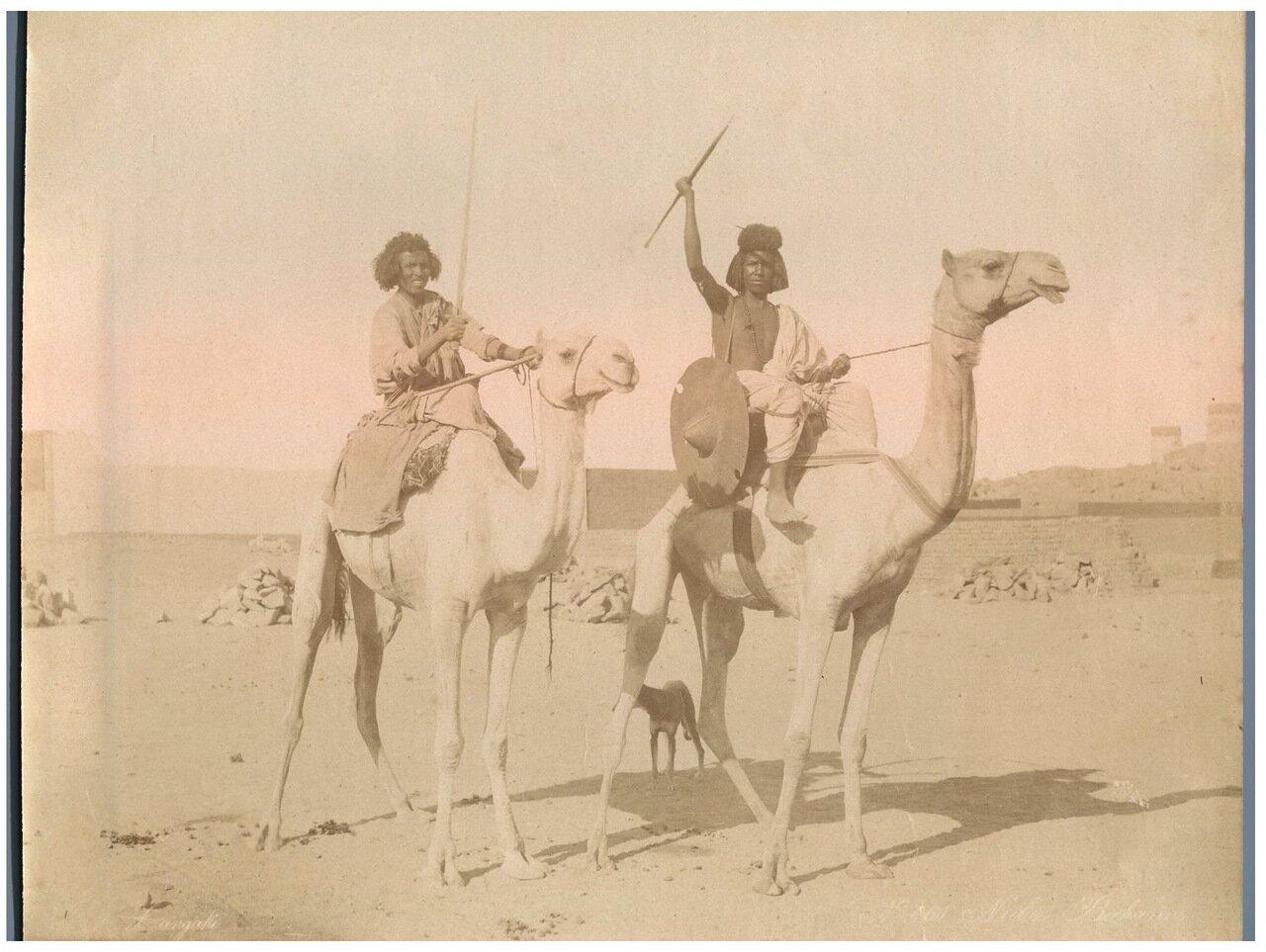 Нубийцы на верблюдах