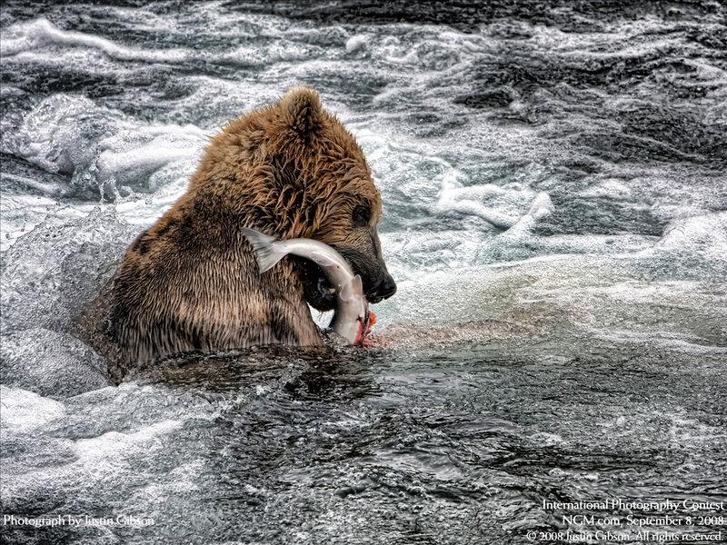 Медведь против рыбы