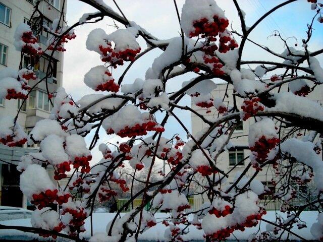 снег 014.jpg