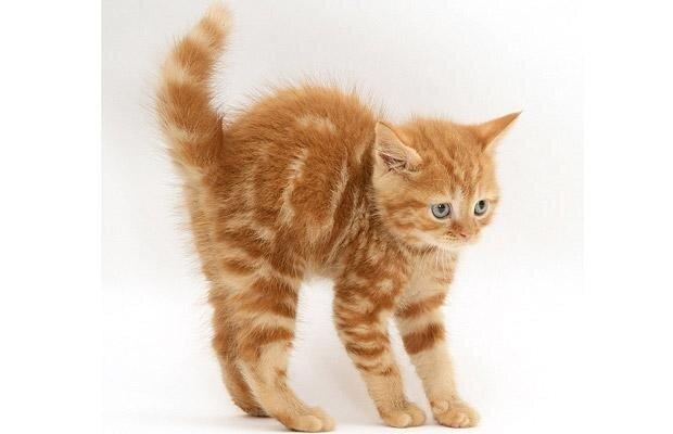 кошки котята кролики собаки