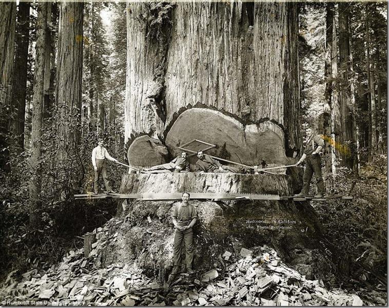 Lumberjacks-From-California-1-800x632_thumb.jpg