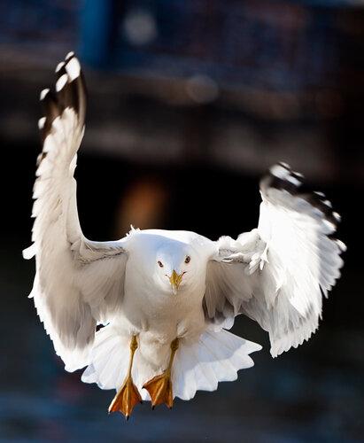 ...птица без роковых падений, совершает взмахи крыльями