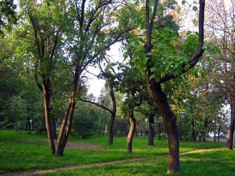 В Центральном парке культуры и отдыха им. Т.Г. Шевченко