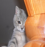 http://img-fotki.yandex.ru/get/2711/s70546448.d/0_172ba_5ff14dca_S