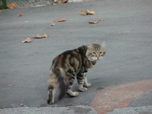 Test-Life — «Кот с полосками вдоль спины. Туапсе рано утром, конец августа 2003г.» на Яндекс.Фотках