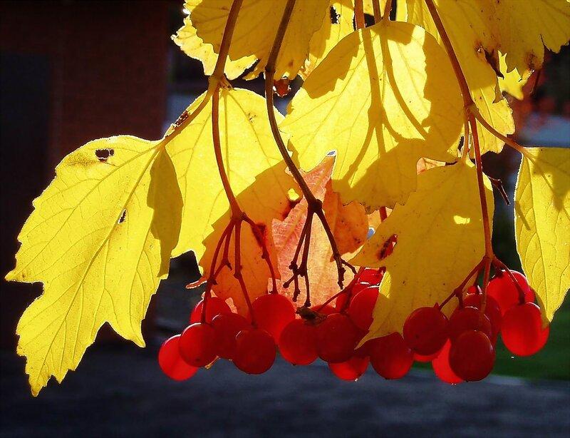 """Схема вышивки  """"Осеннее солнце """": таблица цветов."""