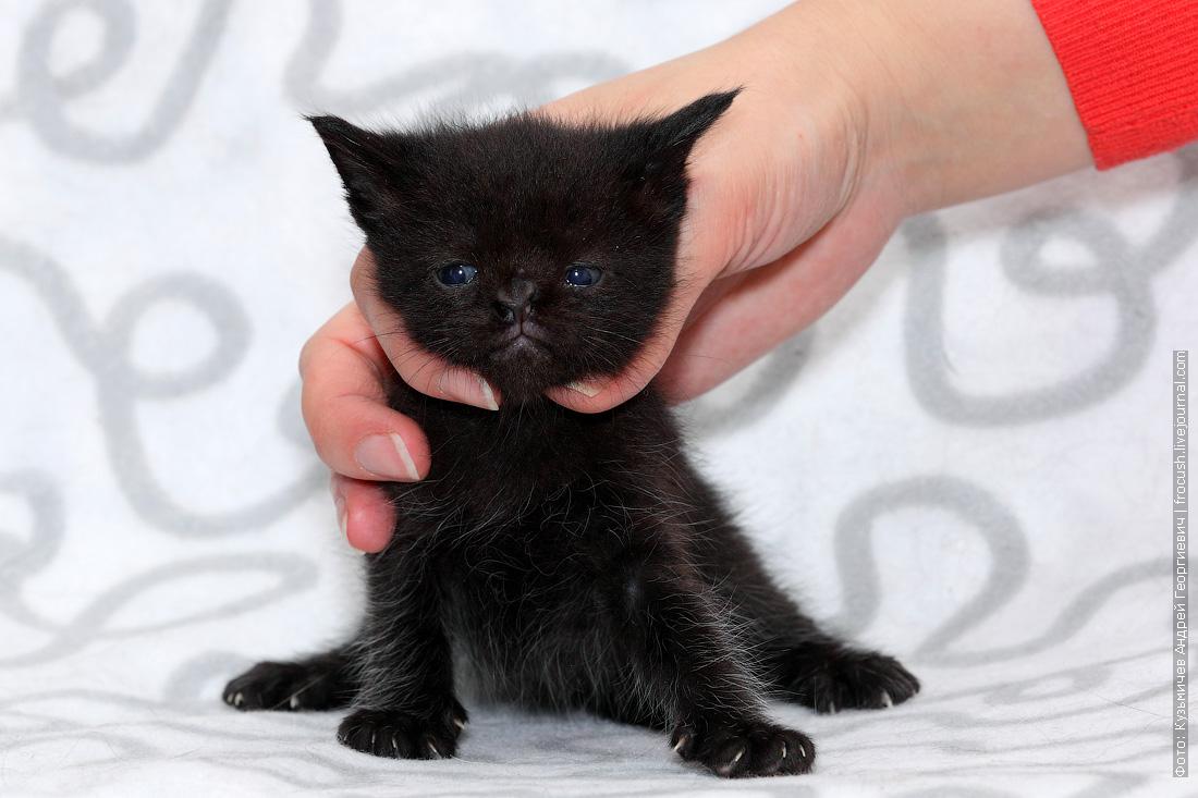 фотография котенок пантеретта