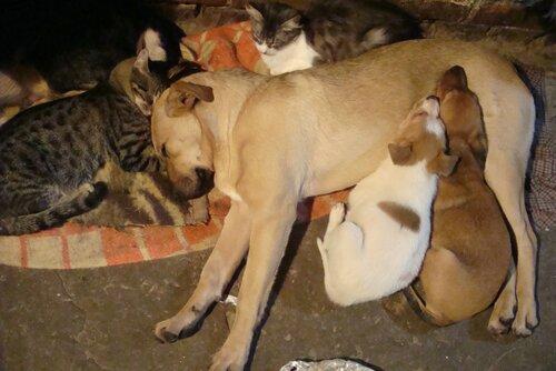 Помощь бездомным животным краснодар
