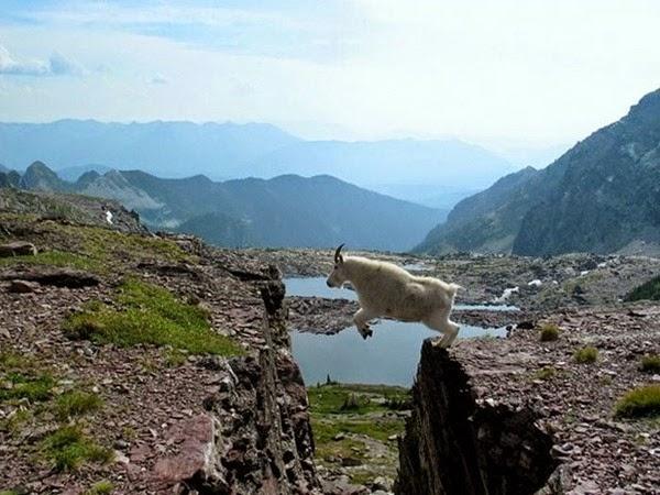 Радостные фотографии прыгающих людей и животных 0 130941 9f2102be orig