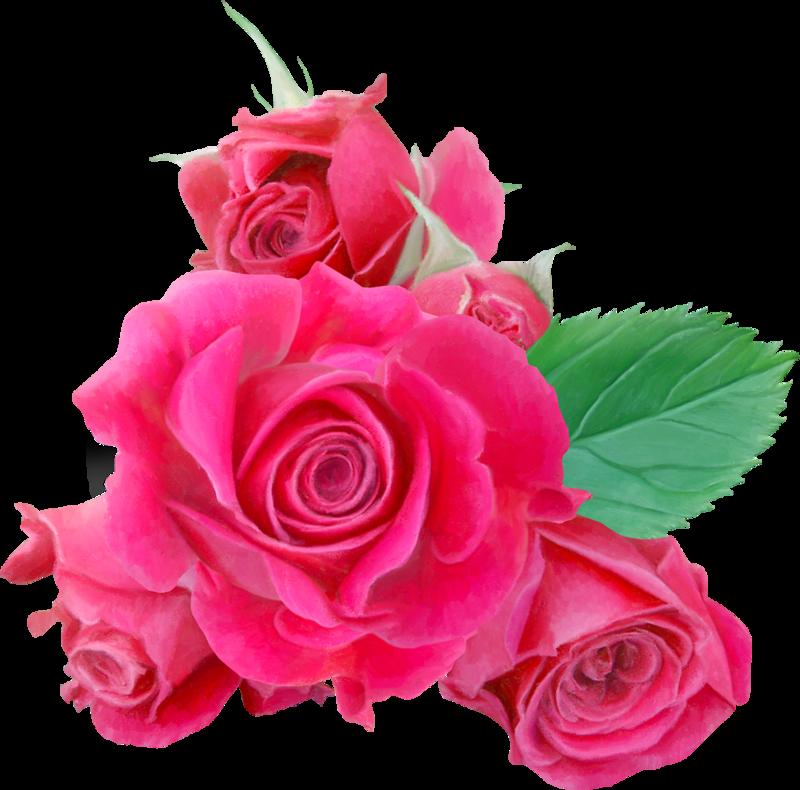 гжельского розовые розы фото на прозрачном фоне найдете перечень