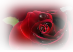 12206401780_fleurs_nikita.png