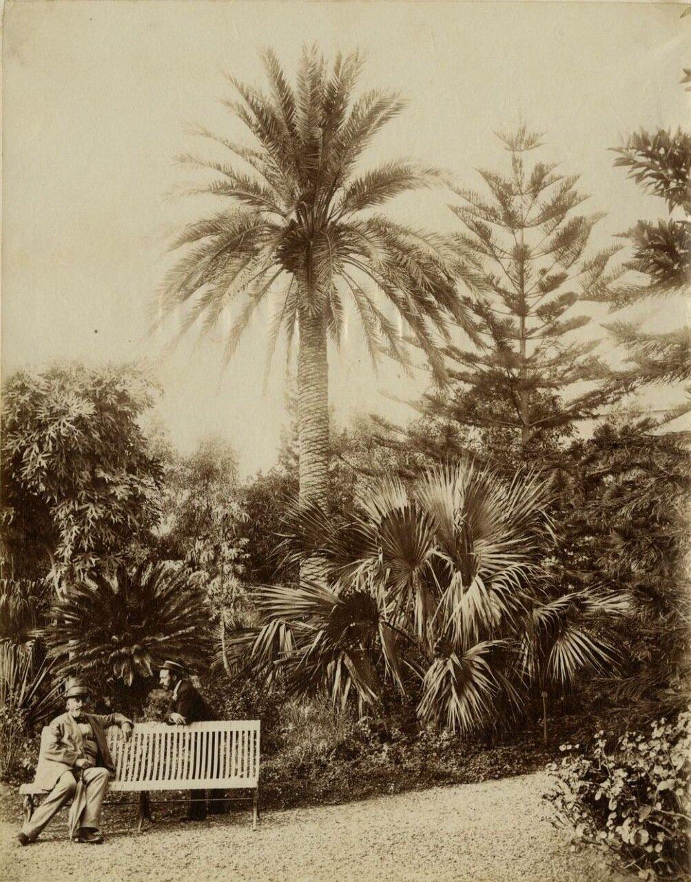 Ботанический сад. Фрагмент