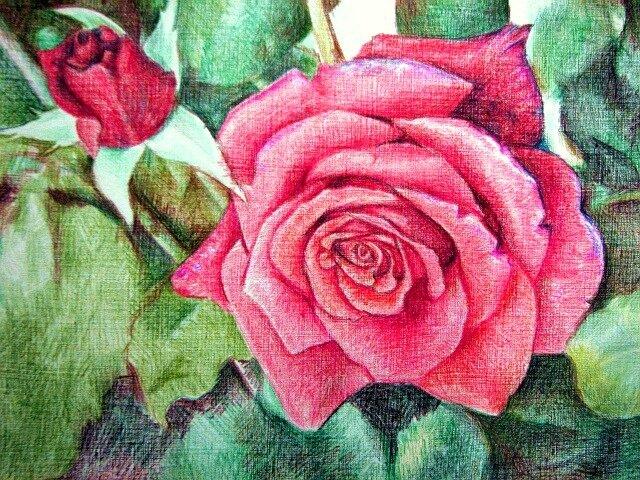 Ее можно изобразить в цвете, однако на первых порах важно научиться правильно работать карандашом.