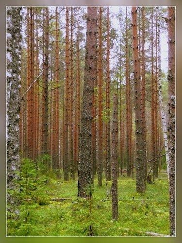 boris-shubin — «В лес за грибами.» на Яндекс.Фотках