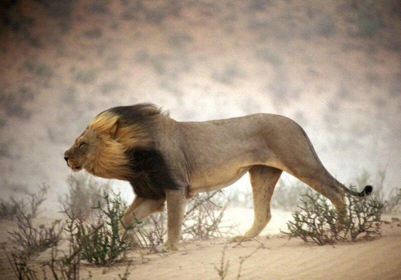 Царь природы