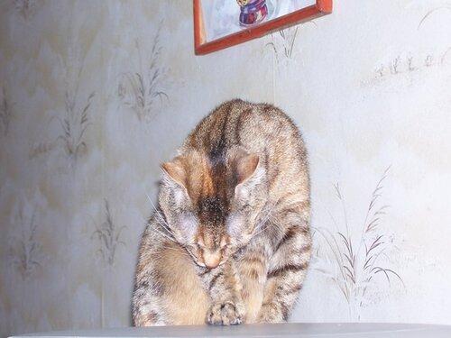 Lyucia — «Кузя, 26.10.2008» на Яндекс.Фотках