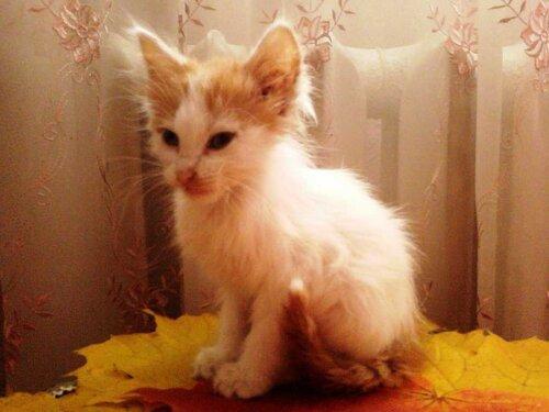 Lyucia — «Котёнок, найденный в лесу девушкой Машей.» на Яндекс.Фотках