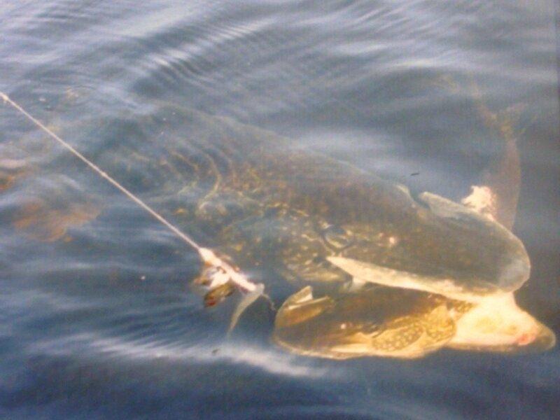 Приколы про зимнюю рыбалку 2 15 видео Смотреть