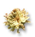 ldavi-fallingleavesautumntea-driedflower16.png