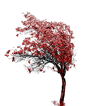 tree02_Mika.png