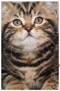 Лаптева-фото - Фотографии животных для питомников и заводчиков - Страница 4 0_12a26a_19303fa6_M