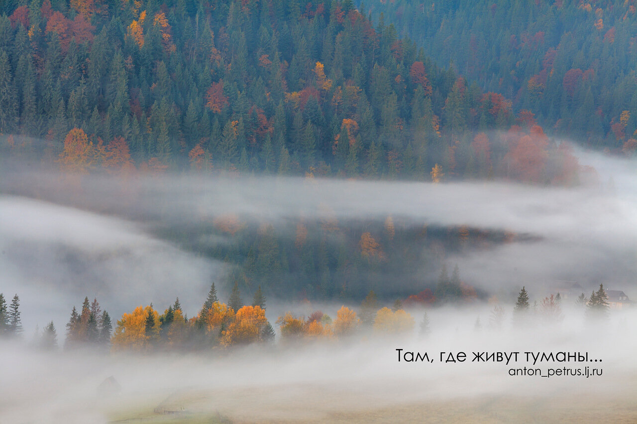 Осень в Карпатах. Туман