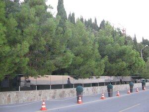 Крымские сосны на набережной в Алуште