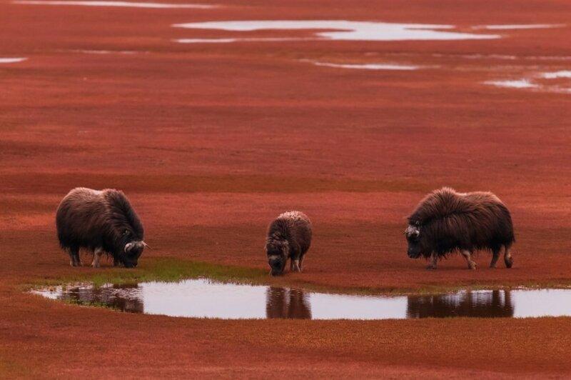 Непостижимая красота дикой природы России. Фотоконкурс National Geographic 0 1b37a7 e89d1a88 XL