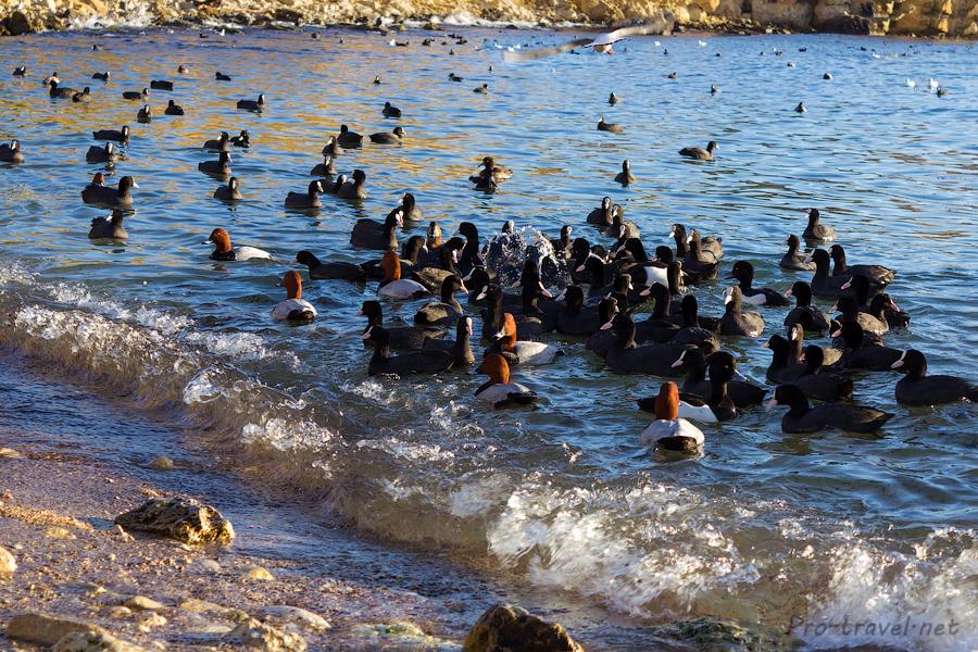Где зимуют птицы