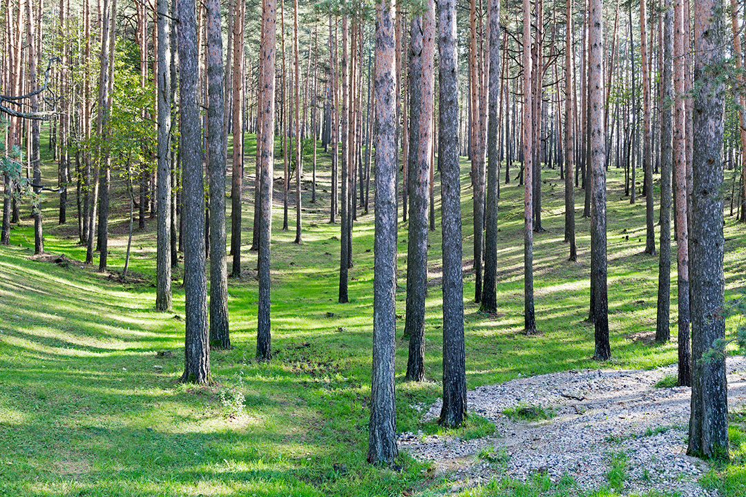 Леса в Златиборе