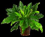 DBK PLANTS 059.png