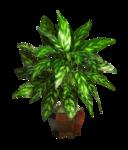 DBK PLANTS 060.png