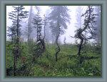 В горы на 30 дней 0_1439_52997729_S