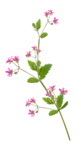 sekadadesigns_pinkflowers_element(49)