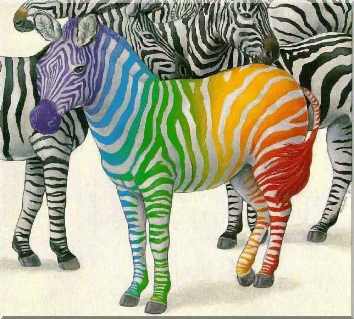 зебра радуга
