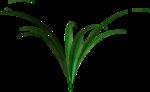 зелень,листья