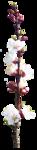 Zalinka-Dallien SM element (43).png