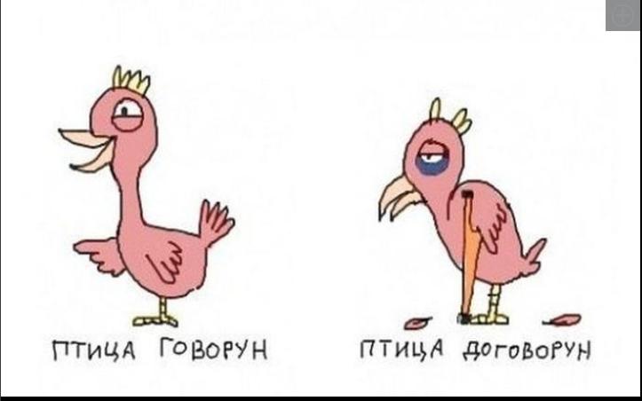 Приколы про птиц