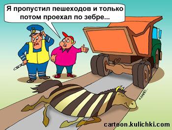 водители, зебра