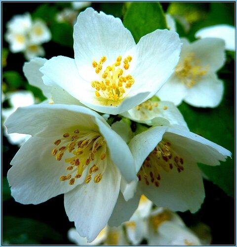 Красота, мудрость и мир - дары Бога, чтобы мы всегда ценили Его милость и  благодарили