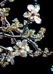 1220640007_fleurs.png