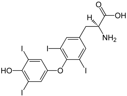 (S)-Thyroxine_Structural_Formulae.png